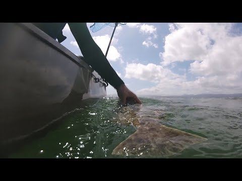 Halibut on a Sabiki????? - Fishing New Waters on the Kayak