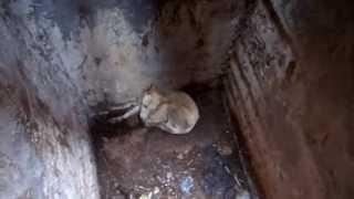 Собака в яме-туалет.