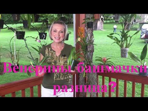 Морковки - корнеплоды орхидейные - Форум любителей