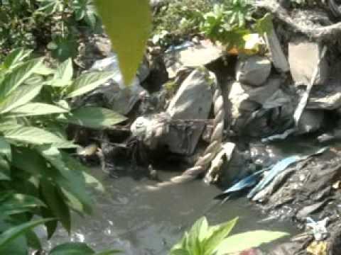 Snake Mating in Bisnumati River (5-3-2013) Part 1