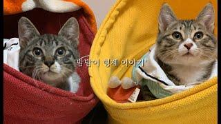 어린 고양이 구조, 마대자루에 넣어진 채 유기되었어요.…