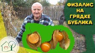 Бублик Б. А. Грядка с физалисом / Огород без хлопот