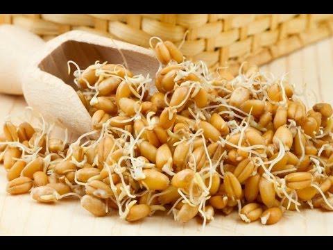 Проращиваем пшеницу, ставим брагу