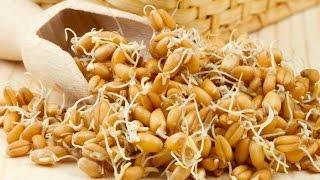 Проращиваем пшеницу, ставим брагу(ПОЖАЛУЙСТА, прежде чем задать вопрос по браге, убедитесь, что у Вас ВСЕ сделано по данному рецепту без откло..., 2015-08-19T18:14:50.000Z)