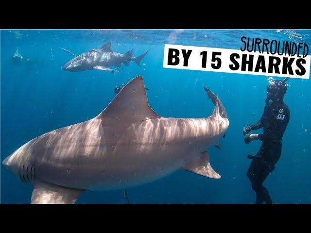 WEEKLY VLOG | SURROUNDED BY 15 Sharks 🦈  Florida Boat Life Ep. 58