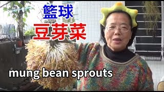 (阿美美)籃球豆芽菜How to grow mung bean sprouts