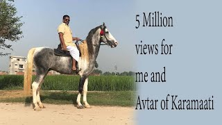 ride with stallion Marwari Avtar of Karamaati