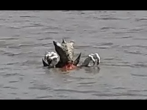 UFO Abductees Filmed Alien Underwater Base, Alien Mermaids & 20 ET Sea Creatures Part 3