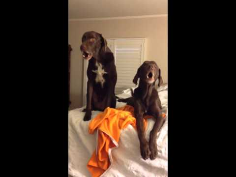 Howling Hounds . . . so hysterical!