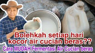 Download lagu Cara penggunaan & Cara fermentasi air cucian beras