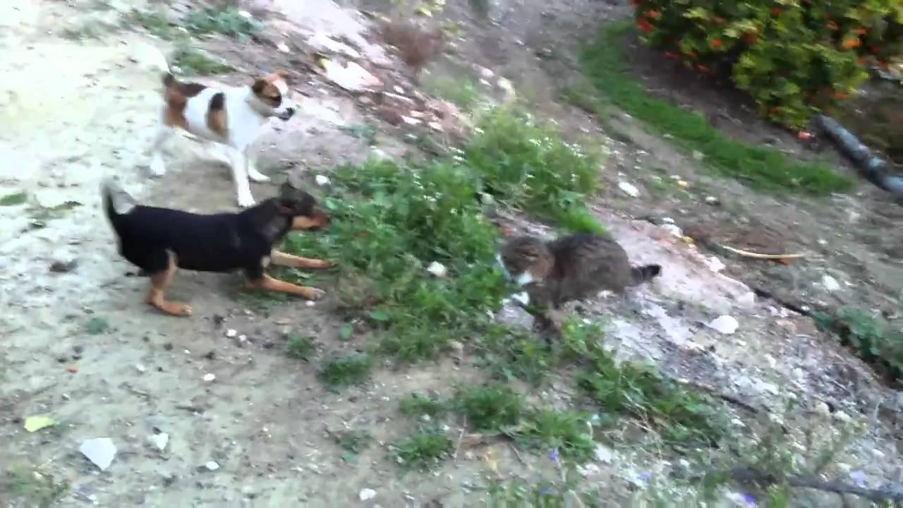Pelea De Perro Con Gato Chispa Y Luna Se Pelean Con Un Gato Youtube