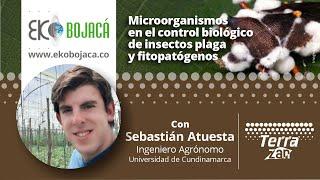 Eko Bojacá | Capacitación Microorganismos en el control biológico de insectos plaga y fitopatógenos