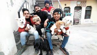CUTEST DOGS  | Lhasa Apso, Cocker Spaniel, Beagle , American bully....