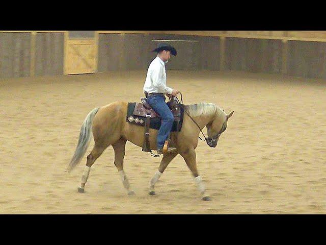 Riding Education - Stylish Chexy Gem -#2