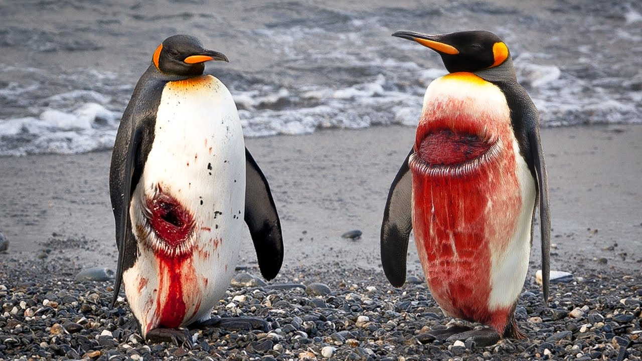 You Don't Want to Be a Penguin