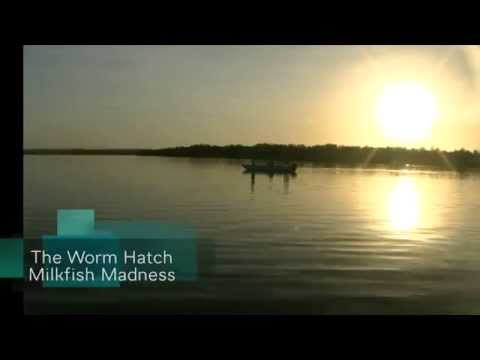 Worm Fly Milkfish