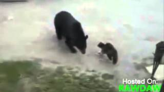 Кошка прогнала медведя The cat chased the bear