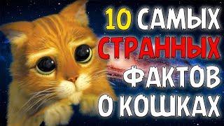 10 САМЫХ СТРАННЫХ ФАКТОВ О КОШКАХ!