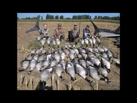 "Amazing Canada Goose Hunting- ""Shoot The Core"" Bill Saiff Outdoors"