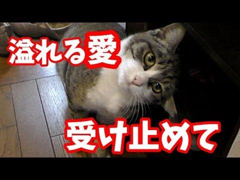 野良猫かつ緒 求愛行動に地蔵が困惑 廊下でゴタゴタする人と猫たち