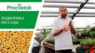 Рассада помидор, перцев, баклажанов. Подкормка рассады для богатого урожая.