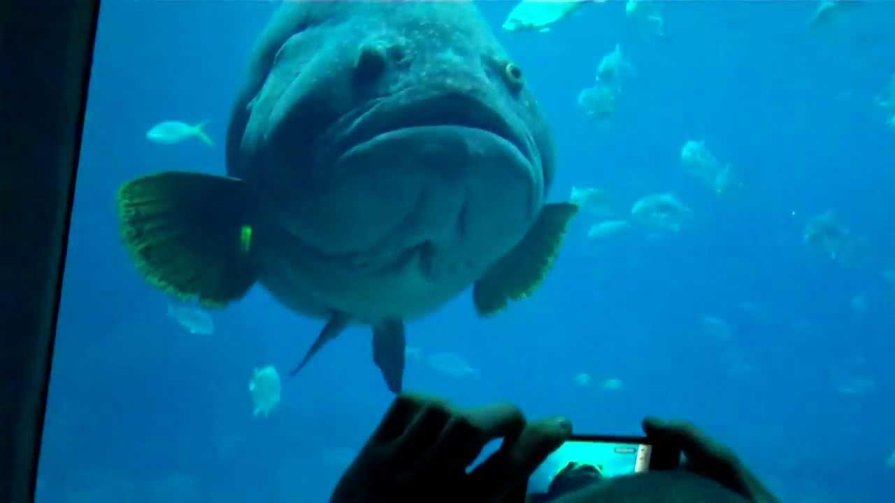 Ocean Voyager Exhibition Inside Of Atlanta Ga Aquarium