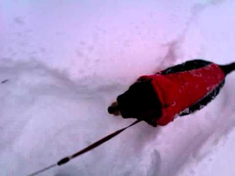 UNIVERSITY PLACE, WA, JANUARY 2012, JUST A LITTLE SNOW...