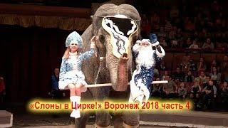 «Слоны в Цирке!» Воронеж 2018 часть 4