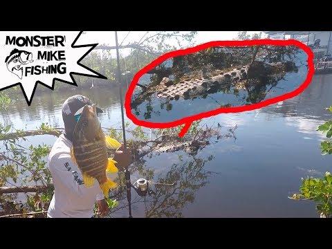 HUGE Crocodile & Underwater Feeding Frenzy!!!