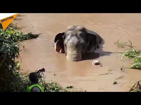 The Rescue of a Baby Elephant in Thailand