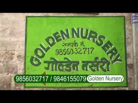 Golden Nursery Siddartha Chowk Pokhara Episode 1 Prabardhan Ntv Plus