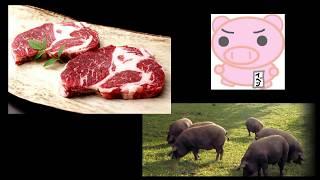 イベリコ豚ってどうよ? thumbnail