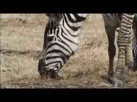 Tanzania - Ngorongoro Conservation Area