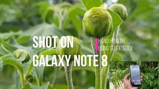 Shot on Samsung Galaxy Note 8