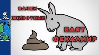 Зачем животные едят свои фекалии? [MinuteEarth]