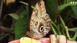 Fém hernyóról álmodott, 2 cm-es hólyag papilloma