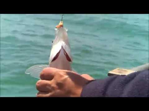 Pesca Del Pejerrey En Embalse La Paloma