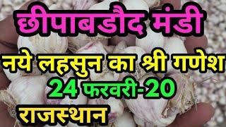 छीपाबडौद मंडी नया लहसुन भाव,  mandi bhav 24-02-2020 bhav ,mandi bhav, Garlic Bhav,