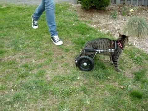 Eddie S Wheels For Cats