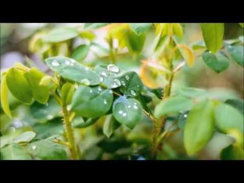 """Перевод стихотворения Афанасия Фета """"Весенний дождь"""" на английский язык"""