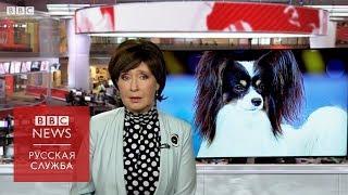 """Самая большая выставка собак в мире готовится к """"брекситу"""""""