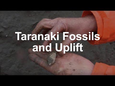 Fossils and tectonic uplift in Taranaki