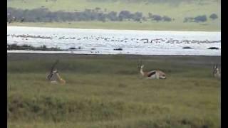 Safari Tanzania: Ngorongoro Conservation Area