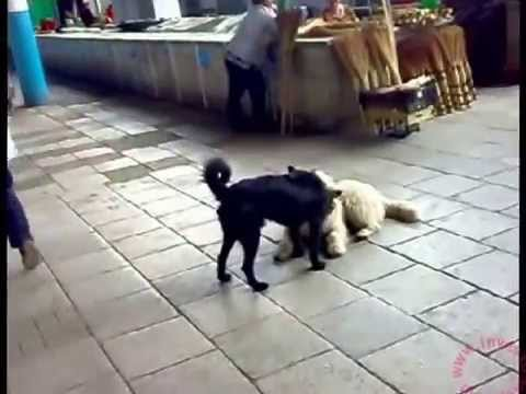 Two Dogs Kissing Publicly In The Market Puppy Love Youtube