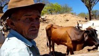 Vaqueiros - o fim de uma era - LAGOA DO ALEGRE