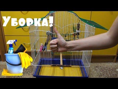 Как часто мыть клетку попугая