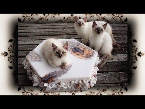 Diy Samt Kuschelbett Für Katzen Hunde Velvet Cuddle Bed For