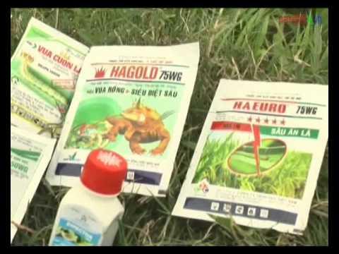 Hướng dẫn kĩ thuật phòng trừ sâu cuốn lá nhỏ và bệnh khô vằn hại lúa vụ Xuân 2015.
