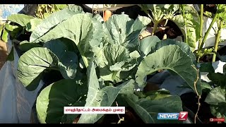 How to Grow Broccoli and Cauliflower in your Terrace Garden | Poovali | News7 Tamil