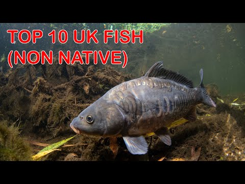 Top 10 British Freshwater Fish (Non Native)